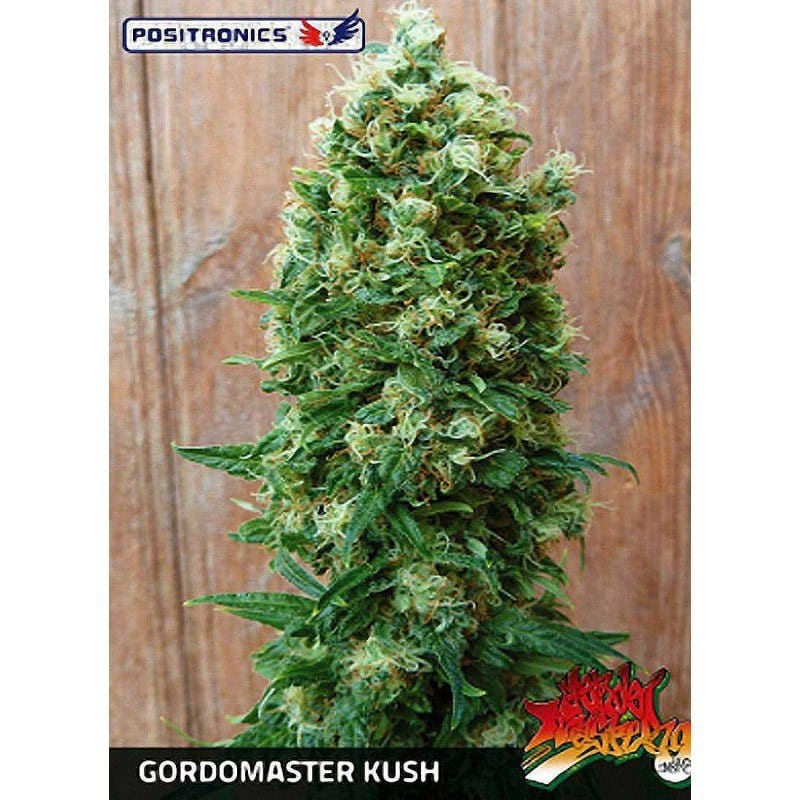 GORDO MASTER KUSH (POSITRONICS)