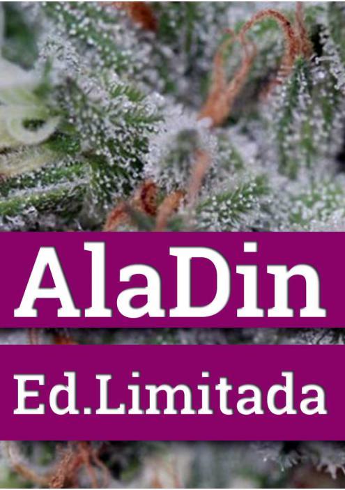 Doctor Underground ALADIN