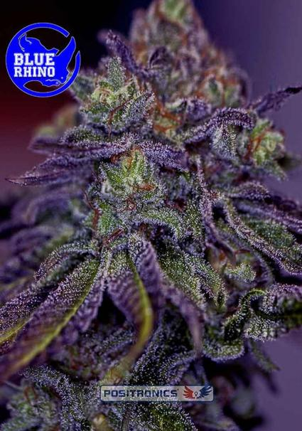 BLUE RHINO