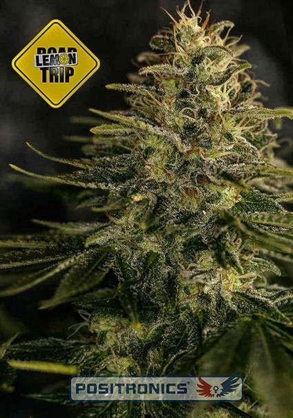 LEMON TRIP