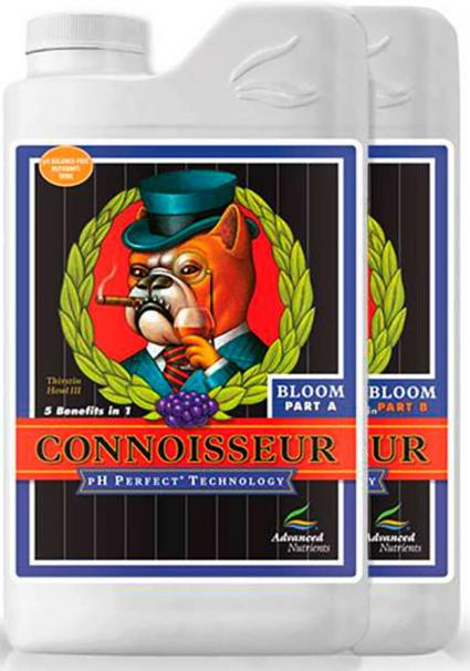 CONNOISSEUR BLOOM