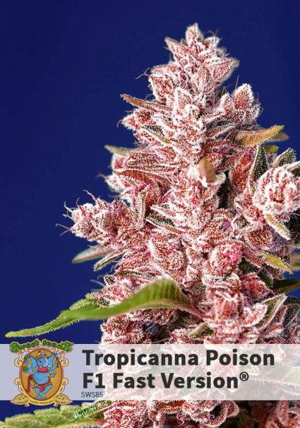 TROPICANNA POISON FAST VERSION