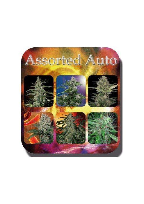Assorted-buddha-seeds