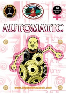 BIG BUDDHA'S AUTOMATIC