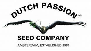 Mejores bancos de semillas de marihuana holandeses