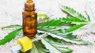 thcp cannabis