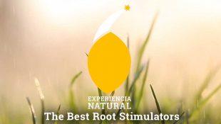 The Best Root Stimulators