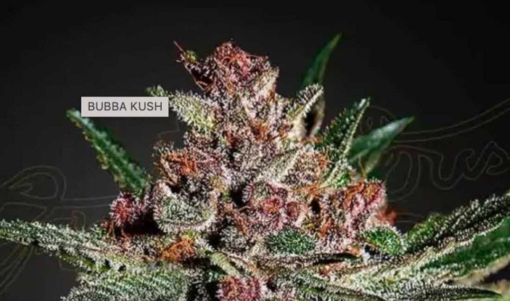 Bubba Kush terpenes