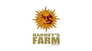 barneys farm seedbank