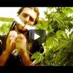 fuma weed experiencia natural