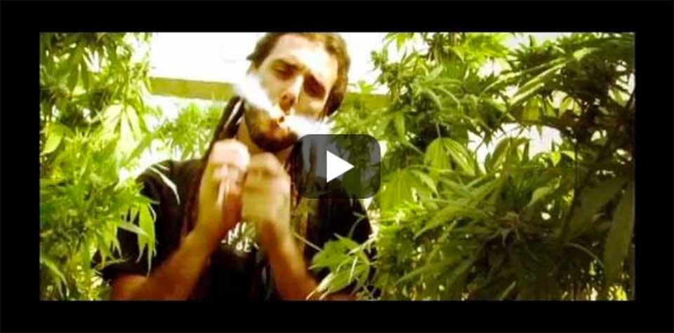 Experiencia Natural Growshop colabora con Swan FyahBwoy en Innadiflames.