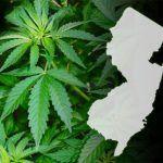 new jersey legalización marihuana