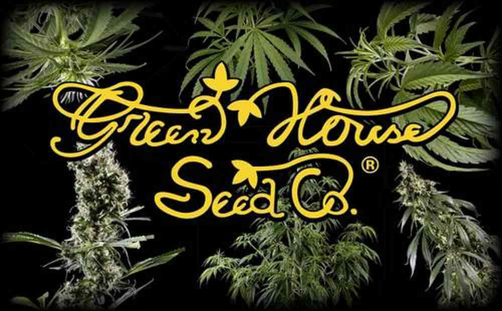 banco de semillas de marihuana green house seeds