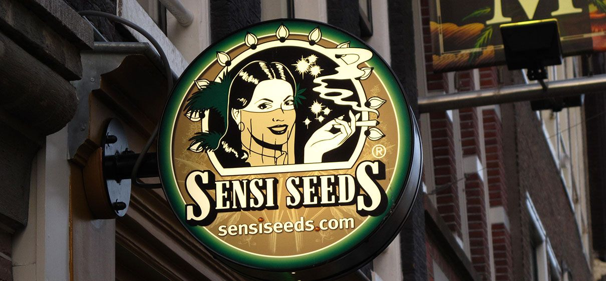 letrero sensi seeds bank