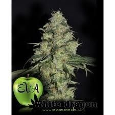 semillas de marihuana White Dragon