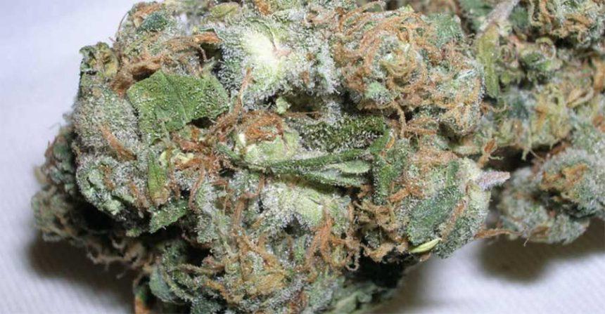 Sweet Tooth marihuana