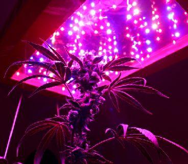 Los Leds en el cultivo de marihuana