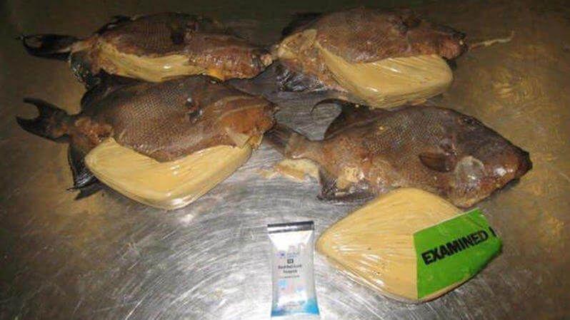 Cocaina dentro de pescado frito
