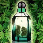 Colonia marihuana