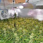 comparativa metodos cultivo marihuana