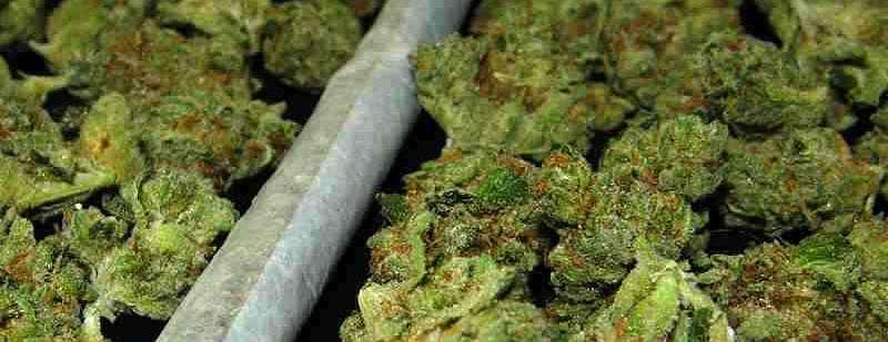 cómo reconocer la calidad de la marihuana