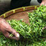 Como hacer un te de marihuana