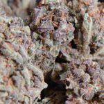 marihuana amnesia haze