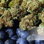 Blueberry marihuana