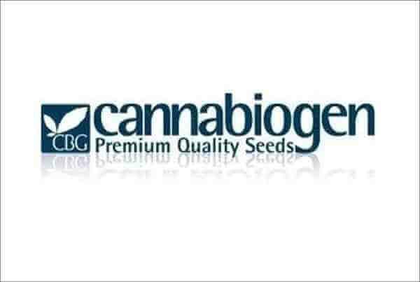 Cannabiogen-banco-de-semillas