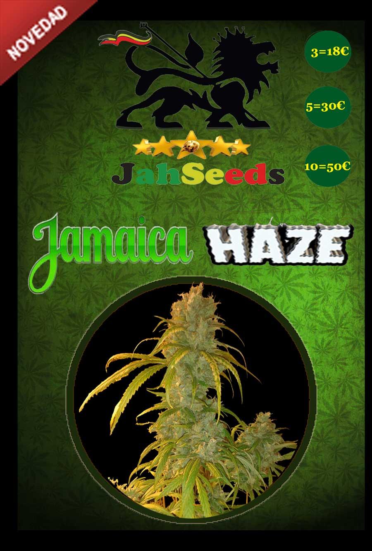 Jamaica Haze