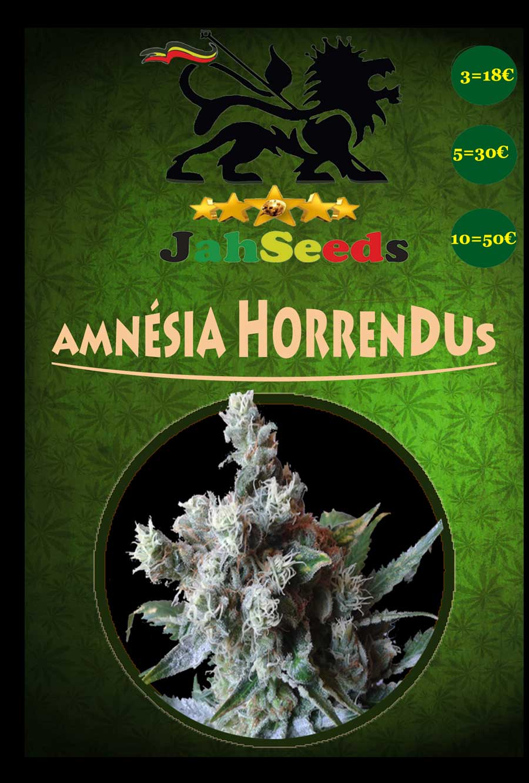 amnesia horrrendus