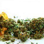 cristina sanchez la marihuana para el cancer