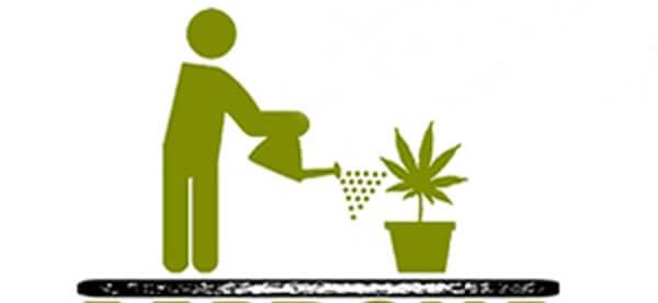 Despenalización del autocultivo de marihuana con la Ley Mordaza