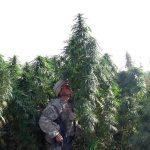 Marihuana medicinal en el ejercito de USA