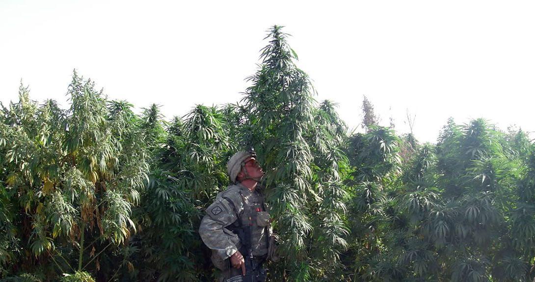 Marihuana para tratar TEPT en el ejercito