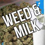 cómo preparar leche de marihuana