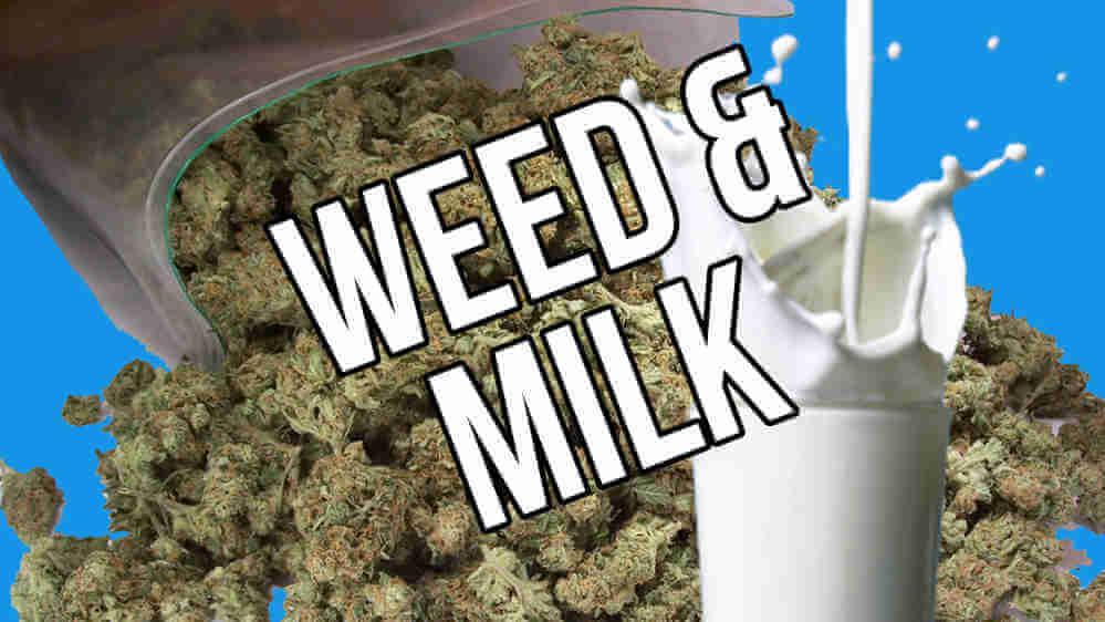 ¿Cómo preparar leche de marihuana?