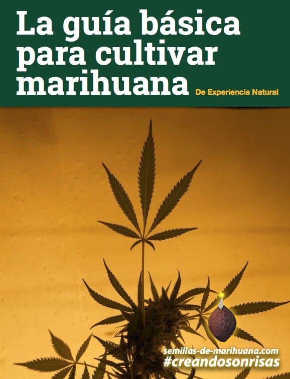 Portada guía de cultivo de marihuana
