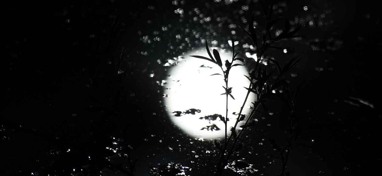 efecto de la luna en la marihuana