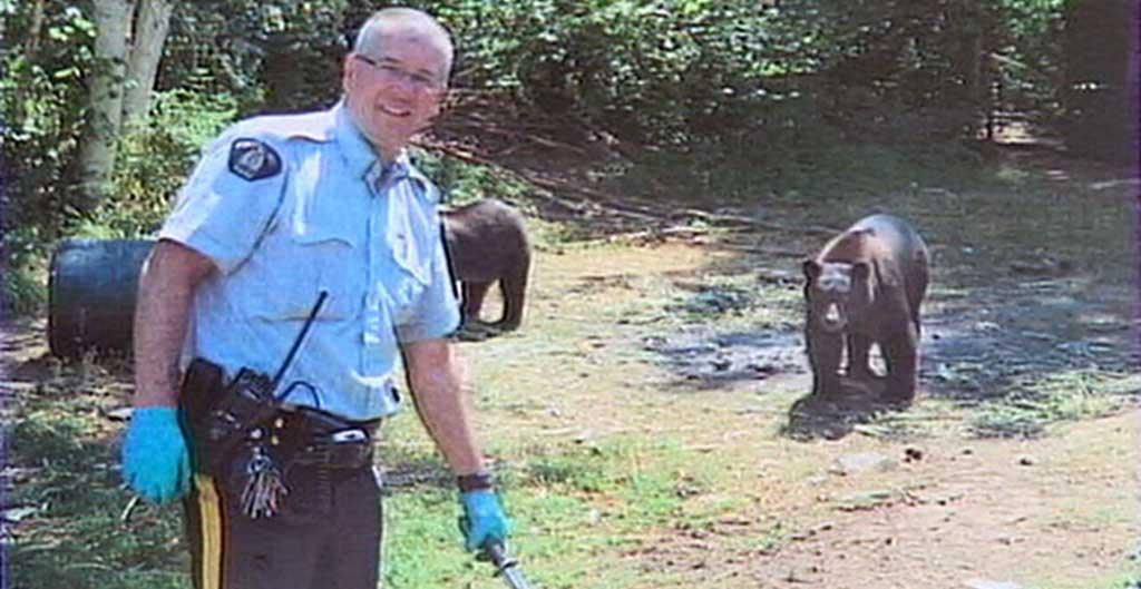 osos protegen cultivo marihuana