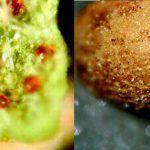 Marihuana 2500 años antiguedad