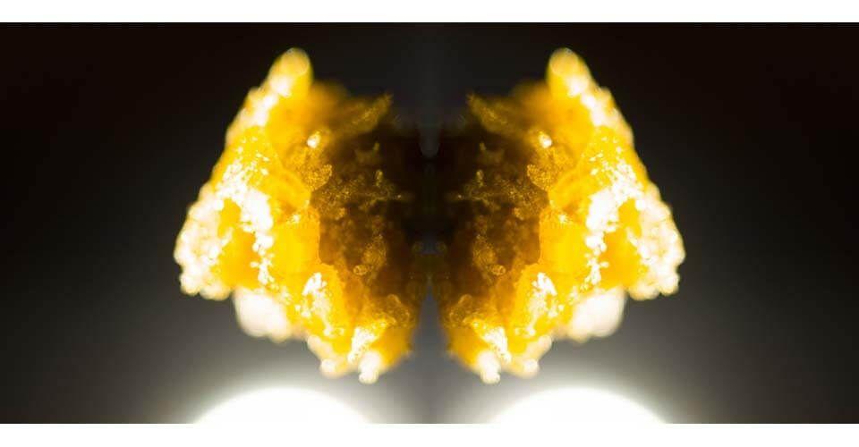 Extractos de marihuana | Tipos de resinas y concentrados