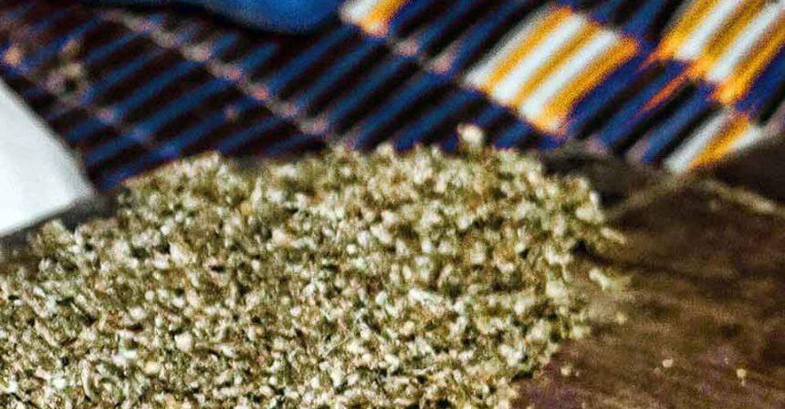 Kief extracto de marihuana