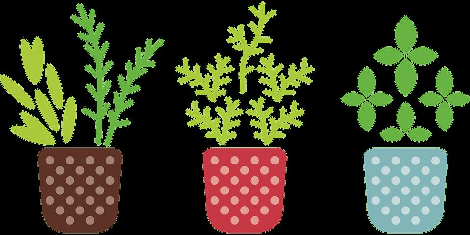 germinación tras guardar semillas