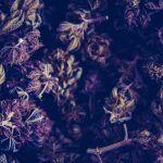 Mucha hierba sobredosis