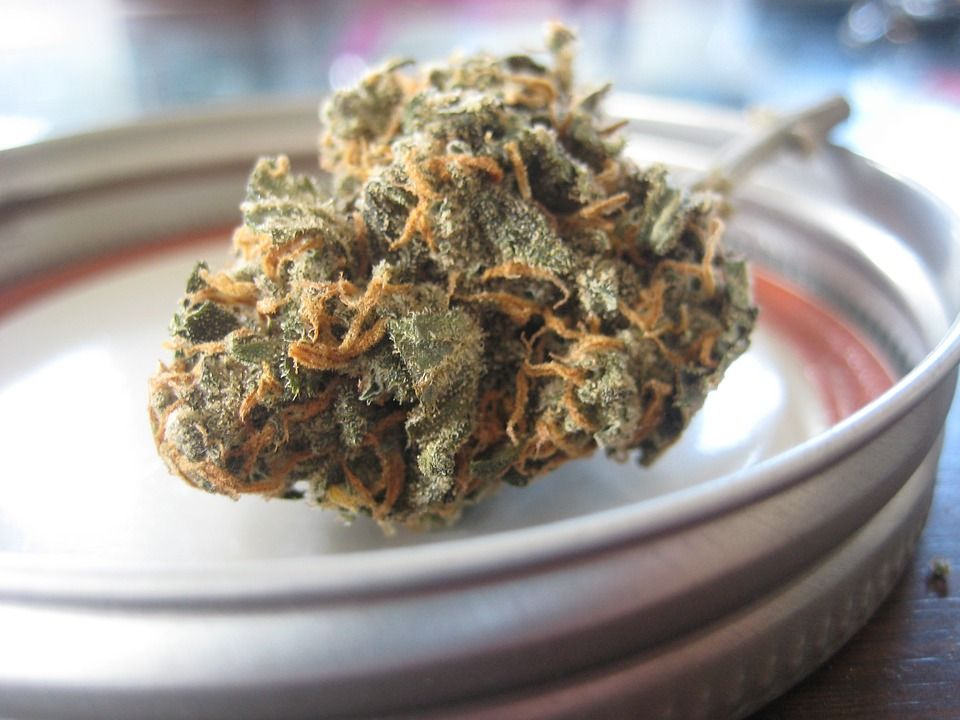 Cogollo de marihuana que contiene CBN