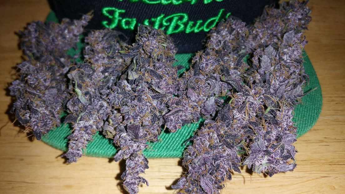 Marihuana autofloreciente de Fast Buds