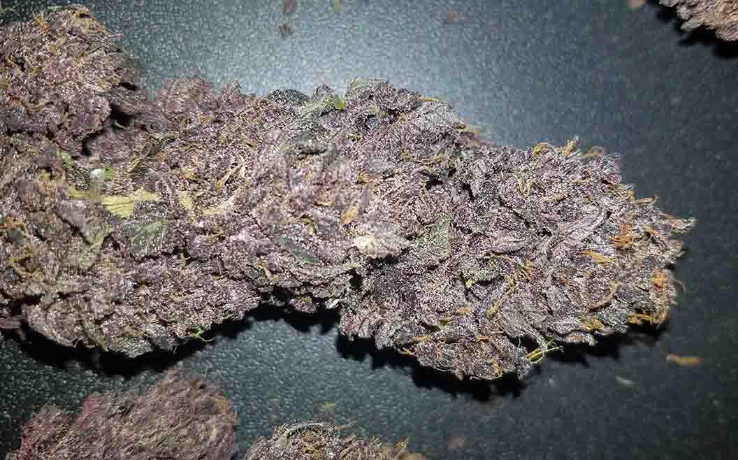 Fast Buds marihuana