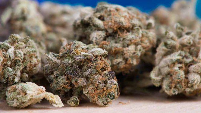 Los mejores bancos de semillas de marihuana