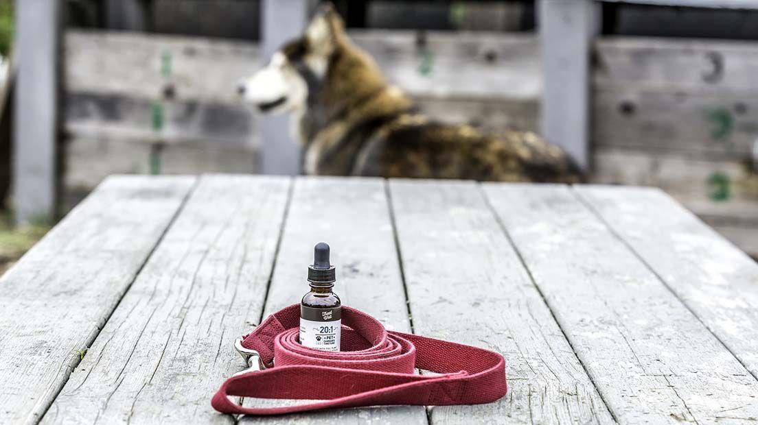 tratamientos de cbd para animales